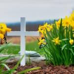 Polizia mortuaria e regolamenti cimiteriali