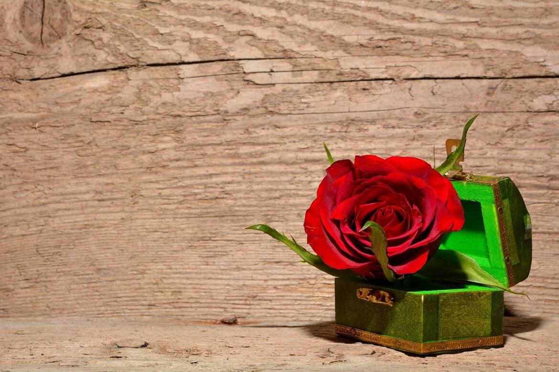 rose-557692_1280.jpg
